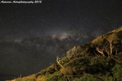 Milky Way over the windswept bush of Maori Bay